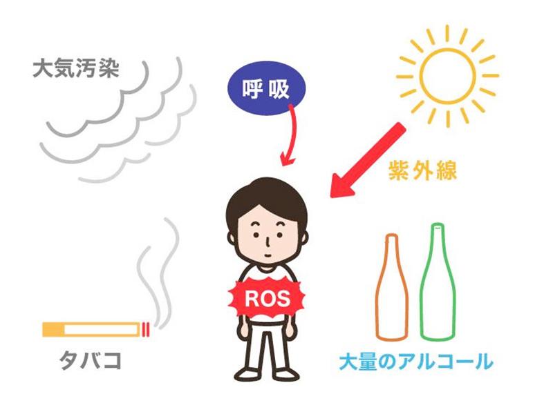 活性酸素種(ROS)と疾患の関係
